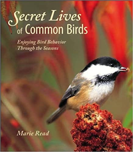 Secret Lives of Common Birds Enjoying Bird Behavior Through the Seasons