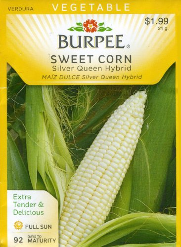 Burpee 65664 Corn, White Silver Queen Hybrid Seed Packet (Seeds Silver Queen Corn)