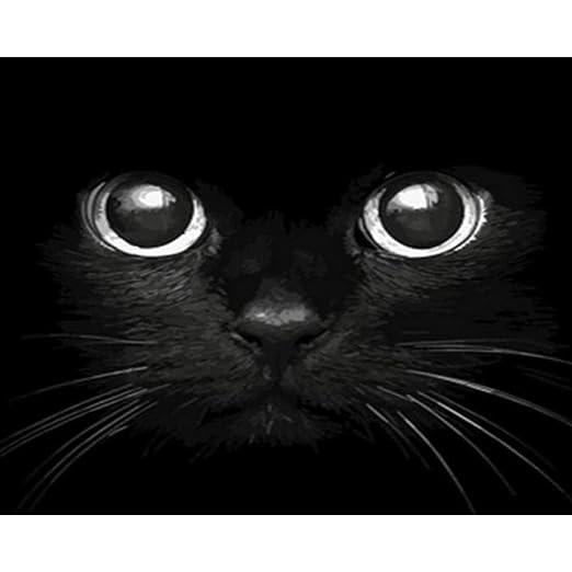Pintura por Números - Cabeza de gato negro - Adultos - pinturas ...
