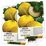 Seed Needs, Golden Beauty Casaba Melon (Cucumis melo) Twin Pack of 100 Seeds Each Non-GMO