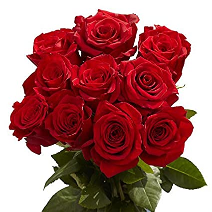 Globalrose 50 Red Roses Beautiful Natural Blooms Fresh Cut Flowers