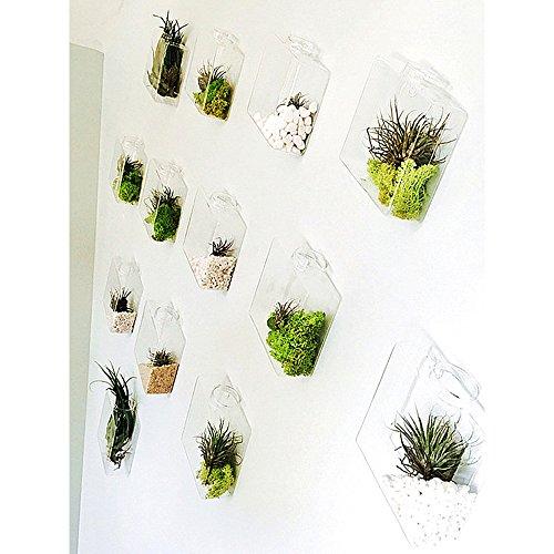 9PCS/Pack Rhombus Glass Wall Vase Indoor Wall Planters Garden Succulent Decorate Living Room WallSmall - Succulent Living Wall Planter