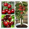 20 Pcs/Bag Cherry Seeds Home Indoor Fruit Bonsai Dwarf Cherry Tree Seed Planting - Gardening Seeds - 1 x Egrow 20 Pcs Cherry Seeds