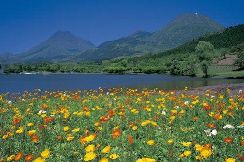 (And 1500 Peace Poppy Yufu-Tsurumi (Beppu, Oita Prefecture) 15-116 (japan import))