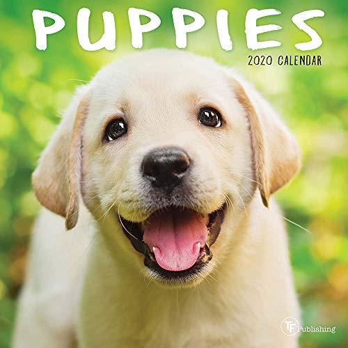 2020 Puppies Mini Calendar