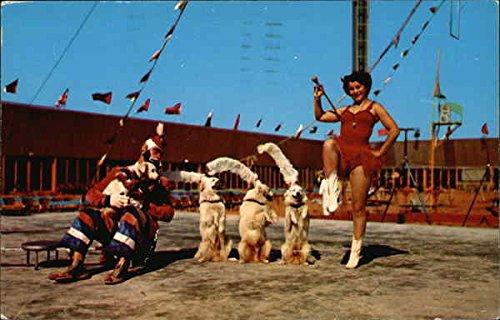 Renee's Canine Cadets at The Circus Hall of Fame Sarasota, Florida Original Vintage Postcard ()