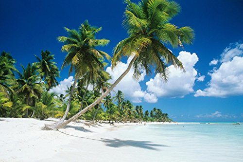 - Palm Trees Beach Saona Island Dominican Republic Photo Art Print Poster 36x24 inch