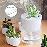 DCMEKA Desk Humidifier, USB Cool Mist Humidifier Whisper-Quiet Operation /4 Hours Timed Auto Shut-Off and Night Light Function, Mini Humidifier for Bedroom Office Hotel Household