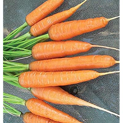 Carrot Seeds - Scarlet Nantes - Heirloom, Untreated, Open Pollinated, Vegetable Biannual ! (1000 Seeds) : Garden & Outdoor