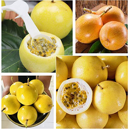 100pcs Yellow Passion Fruit Seeds, Delicious Fruit Seeds Easy Growing for Home Garden Yard Farm Planting