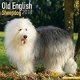 Old English Sheepdog Calendar - Dog Breed Calendars - 2017 - 2018 wall Calendars - 16 Month by Avonside