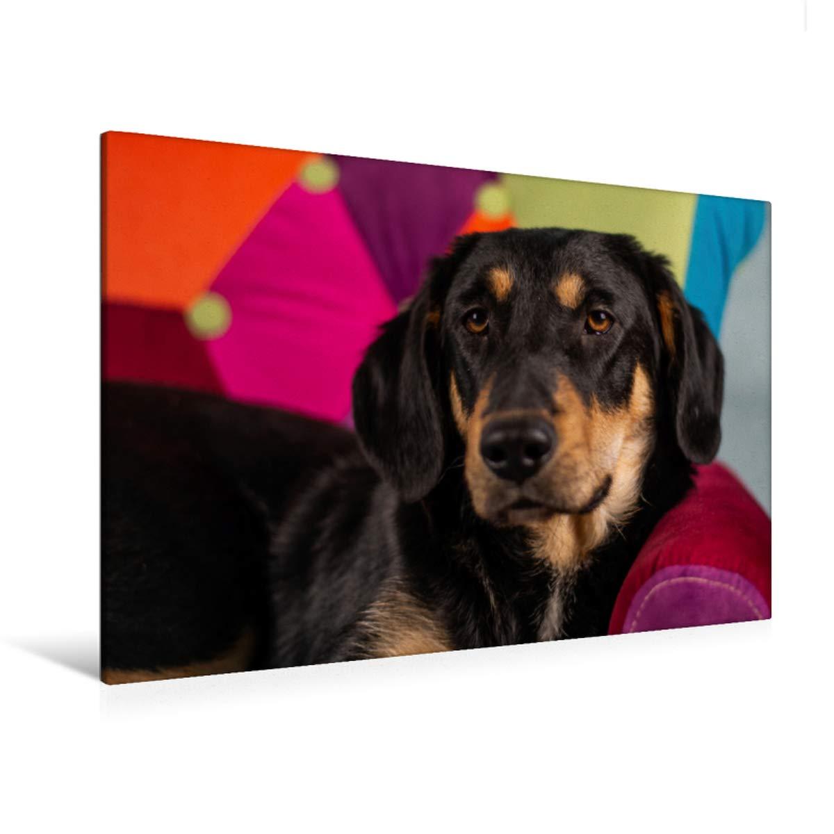 120 x 80 Premium Textile Canvas 90 x 60 cm Horizontal Dog View