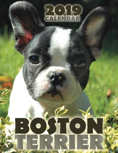 Wall Boston Usa (Boston Terrier 2019 Calendar)