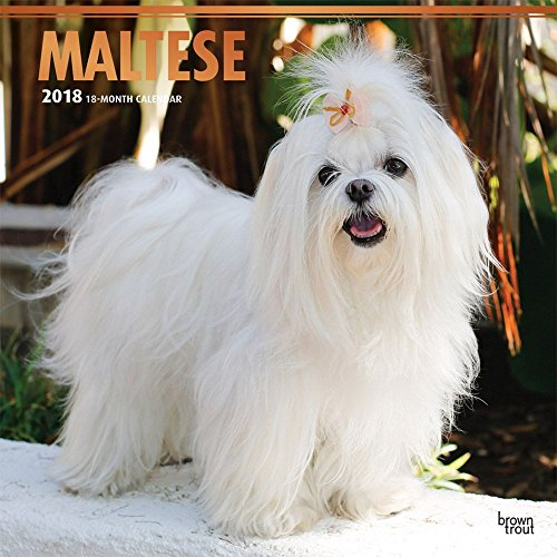 Maltese 2018 12 x 12 Inch Monthly Square Wall Calendar with Foil Stamped Cover, Animals Small Dog Breeds Pet (Multilingual (Maltese Garden)