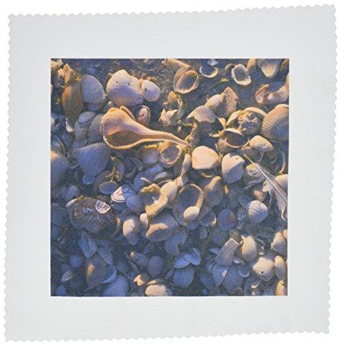 3dRose qs_89225_1 Sea Shells, Captiva Island, Florida-Us10 Mpr0288-Maresa Pryor-Quilt Square, 10 by 10-Inch
