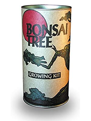 Bonsai Tree Grow Kit - Japanese Maple
