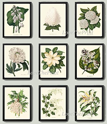 Botanical Flower Print Set of 9 Prints Antique Beautiful White Lily Grapes Fruit Magnolia Peony