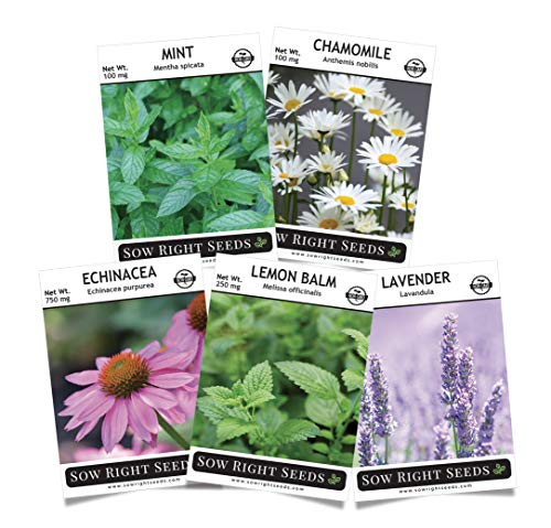 Sow Right Seeds - Herbal Tea Collection - Lemon Balm, Chamomile, Mint, Lavender, Echinacea Herb Seed for Planting; Non-GMO Heirloom Seed, Instructions to Plant Indoor or Outdoor; Great Gardening Gift (Best Indoor Plant Seeds)