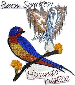 Naturaleza Weaved en hilos, increíble aves Reino [Barn Swallow y ...