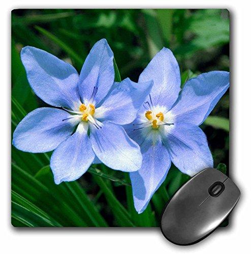 3dRose USA Kansas Prairie Flower Mouse Pad (mp_191556_1)