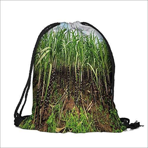 Storage Bag sugar cane plantation khanh hoa province vietnam Machine Washable Sturdy Rip-Stop Material 12
