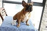iChoue Bulldog Piggy Money Bank Resin Handicraft Ornament Gift for Kids & Adults (White)