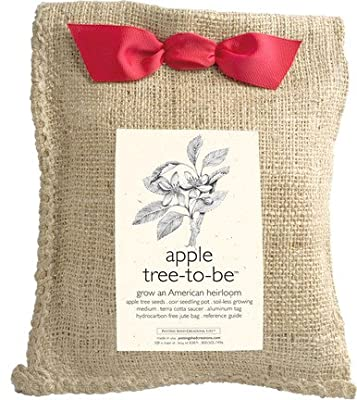 Potting Shed Creations Apple Tree-to-Be