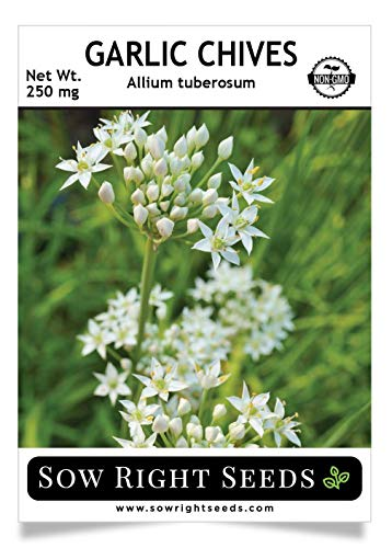 Sow Right Seeds - Garlic Chives Seed for Planting - Non-GMO Heirloom Seeds with Full Instructions for Planting an Easy to Grow Kitchen Garden, Indoor or Outdoor; Great Gift