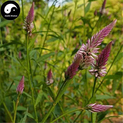 Shoppy Star Germinación de las semillas: 100 piezas: comprar semillas de hierbas Celosia Planta pluma Cockscomb Para...