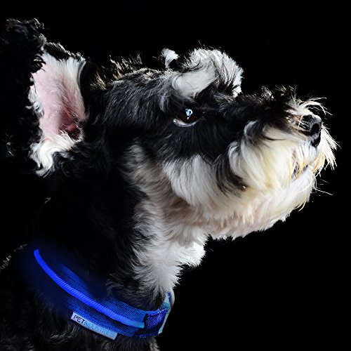 FLASH-SALE-Premium-LED-Dog-Collar-with-Quick-Release-Metal-Buckle-USB-Rechargeable-Available-in-7-Colors-4-Sizes