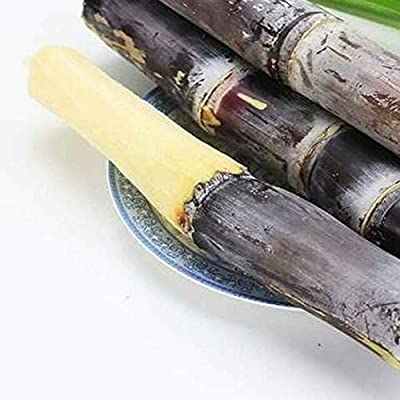 everd1487HH 50Pcs Sugarcane Seeds Delicious Juicy Fruit Plant Farm Garden Balcony Outdoor Bonsai Perfume Flower Perennial Plant- Green 50pcs Sugarcane Seeds : Garden & Outdoor