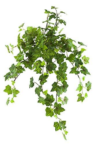 Ivy Bush - Renaissance 2000 97011-GRNRED 19