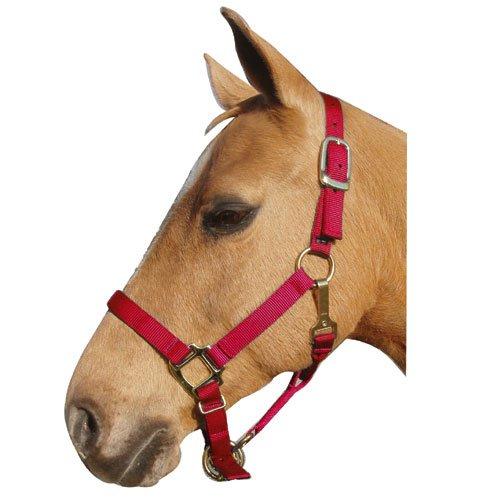 Intrepid International ナイロン馬用ホルター B008OAXAUK  レッド Yearling