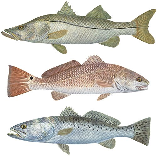 3 Separate Decals Trout Redfish Snook MINI Stickers ()