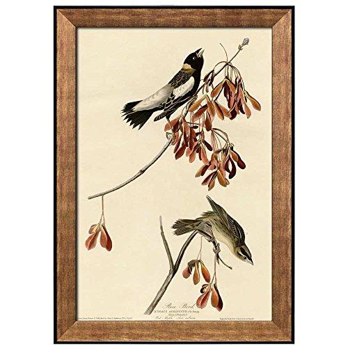 Beautiful Illustration Inside of an Elegant Frame of a Rice Bird by John James Audubon Framed Art