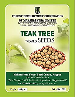 Seedstores : 50 Fresh Seeds Of Precious Indian Sandalwood Santalum