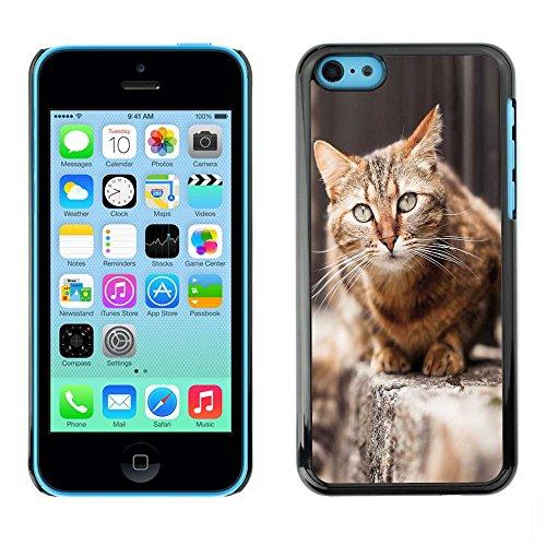GooooStore/Housse Etui Cas Coque - House Cat Shorthair British Street Furry - Apple iPhone 5C