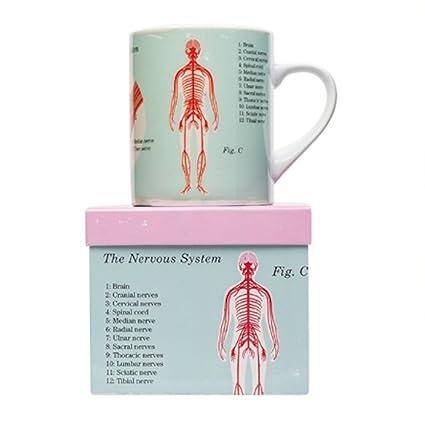 Jay Magpie anatómico de tamaño Grande Big Taza de café té – Sistema Nervioso