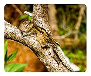 The Baby Squirrel Takes A Nap Mouse Pad Desktop Mousepad Laptop Mousepads Comfortable Computer Mouse Mat Cute Gaming Mouse pad by runtopwell
