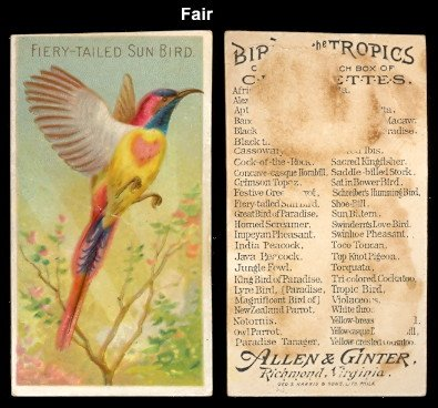 Tailed Tropic Bird - 1889 Allen & Ginter N5 Birds of the Tropics (Non-Sports) Card# 12 fiery tailed sun bird Fair Condition