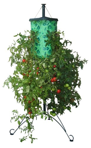 TOPSY TURVY TOMATO TREE WITH STEEL STAND  U0027u0027TURNING THE WORLD OF GARDENING  UPSIDE