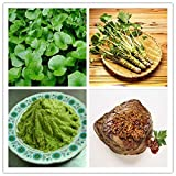 Portal Cool 100Pcs: 100/200 Pcs Home Garden Wasabi Seeds Japanese Horseradish Seed Vegetable Pop
