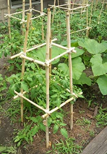 bean pole for three sisters method of gardening