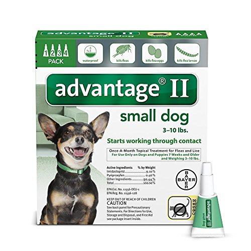 Flea treatment for small dogs amazon bayer advantage ii flea and lice treatment for small dogs 3 10 lb 4 doses solutioingenieria Image collections
