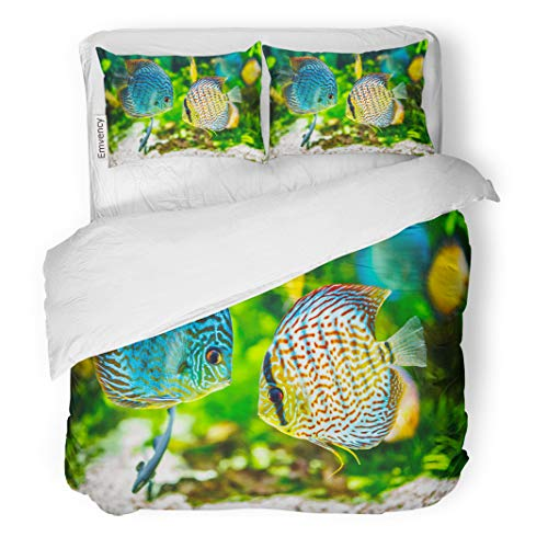 - Semtomn Decor Duvet Cover Set Twin Size Blue Fish Symphysodon Discus in Aquarium on Green Colorful 3 Piece Brushed Microfiber Fabric Print Bedding Set Cover