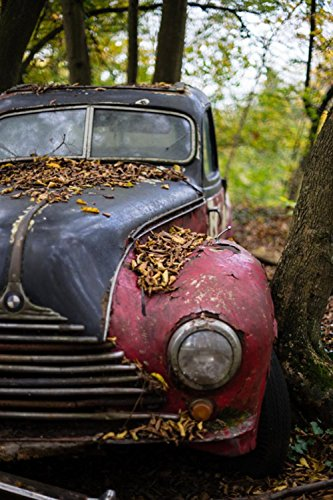 LAMINATED 24x36 inches POSTER: Classic Car Rusted Car Vintage Junk Yard Scrapyard Bmw 1950S Old Rust Leaves Tree Accident Rusty Aged Automobile Abandoned Weathered Forgotten Nostalgia Neglected