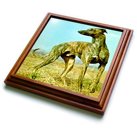 3dRose trv_484_1 Brindle Greyhound Trivet with Ceramic Tile, 8 by 8