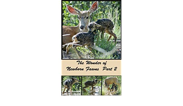 The Wonder of Newborn Fawns  Part 2 (The Colorado Urban Wildlife Series Book 4)