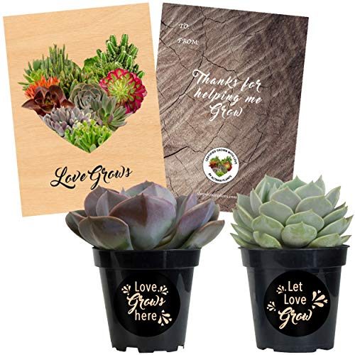- Altman Plants Assorted Live Succulents Love Grows Rosette Collection with Pot Stickers Perfect Gift Includes (1) To/From Card, 3.5