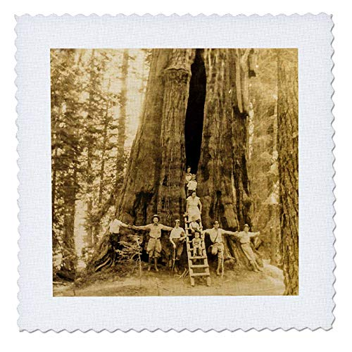 (3dRose Scenes from The Past - Stereoview - The Room Tree Sequoia National Park 1930s Scenic America Set Vintage - 10x10 inch Quilt Square (qs_300249_1))